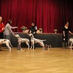 Special dalmatian show in Blansko, CZ Judge: Jean Pierre Achtergael, males, class junior: Divalinor Just Do It - Exc. 3