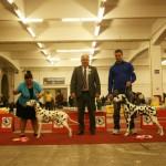 Speciality Dalmatian Show, Zagreb 2014