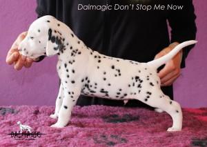 saitDalmagic Don't Stop Me Now 1 month left side2